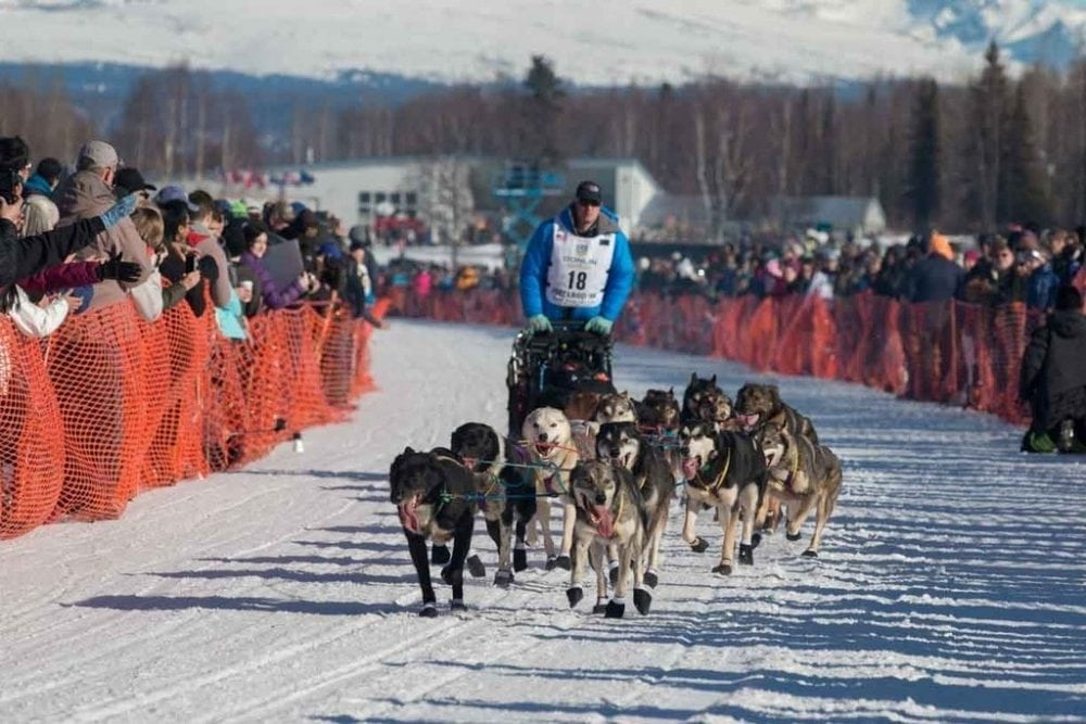 With the rally over, you can watch the ceremonial start of the Iditarod Sled race.